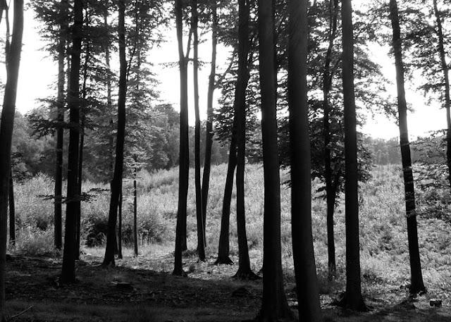 Lieblingsplatz Wald, Neunzehngrad, BIWYFI,