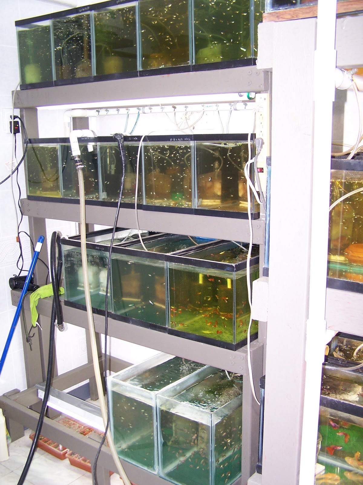 Guppychampion the new fish rooms for Fish tank rack