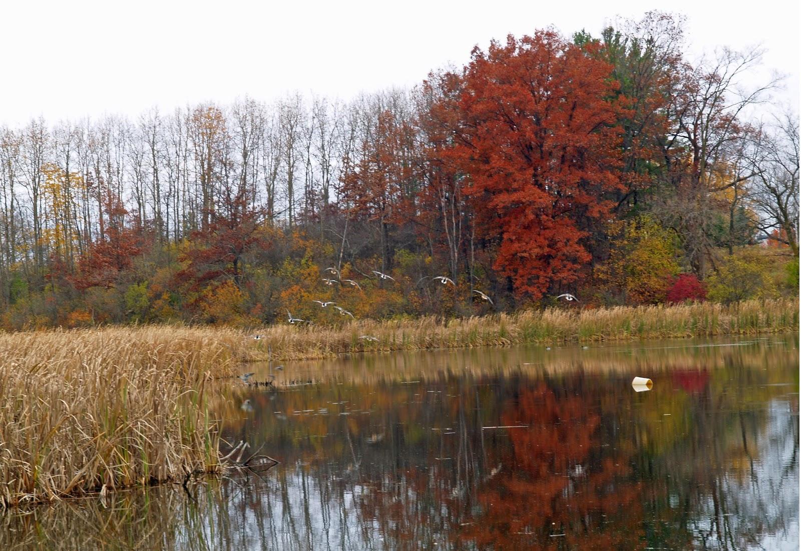 All Things Grand Rapids: November 2014