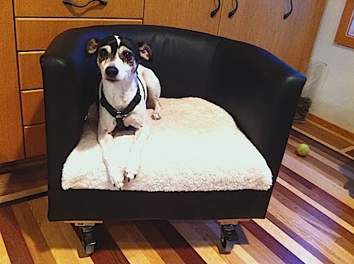 Rolling Dog Bed v2