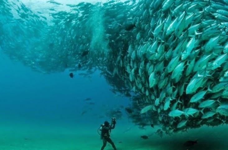 بال نت بال: شاهد فيديو : إعصار من الأسماك بالقرب من شواطىء ...