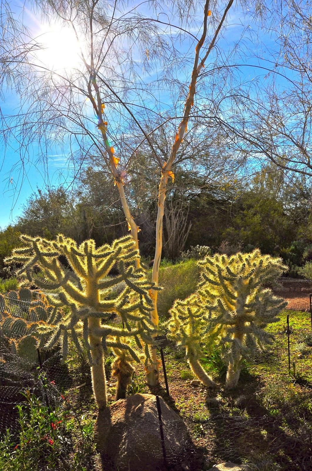 Sunshine Nomads: Phoenix Desert Botanical Gardens