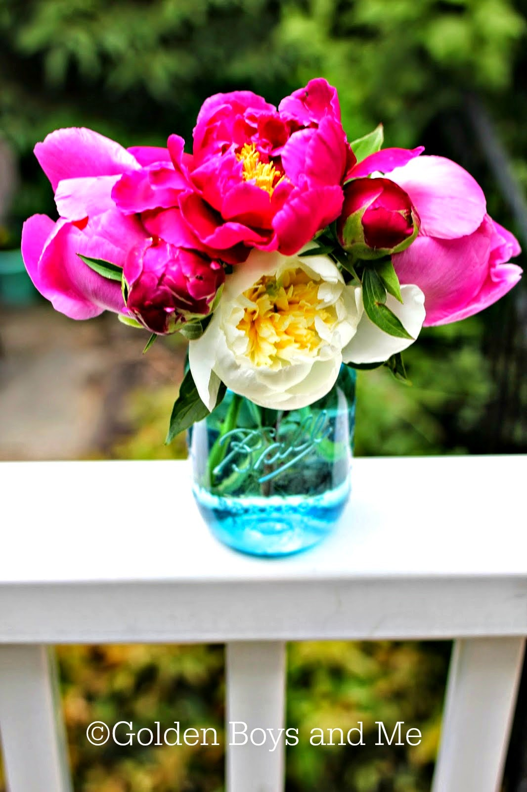 fresh cut peonies in a blue mason jar-www.goldenboysandme.com
