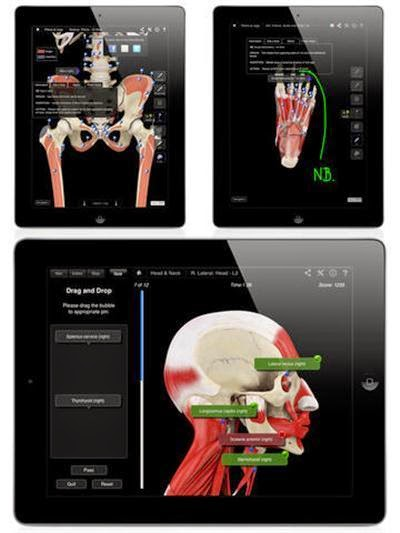 Muscle-System-Pro-III-v3.8