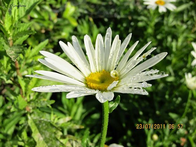 Kodaikanal Flower Show