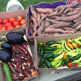 Latest Vegetable Harvest Donation