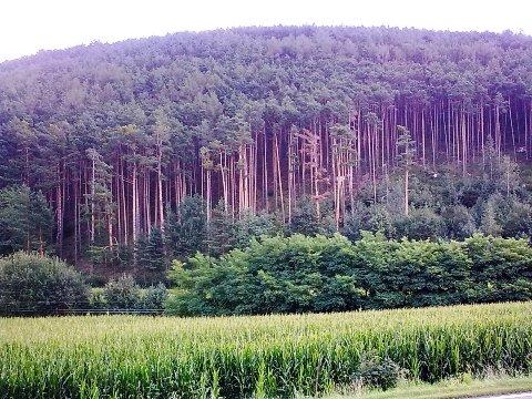 Particolare del bosco sulla ciclabile Brunico - Bressanone