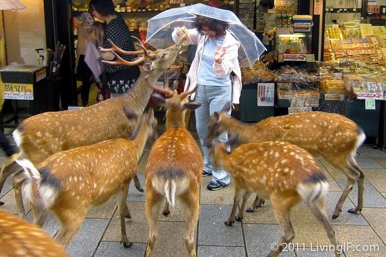 """مدينة """"نارا"""" في اليابان, المدينة التي استولى عليها الغزلان!"""