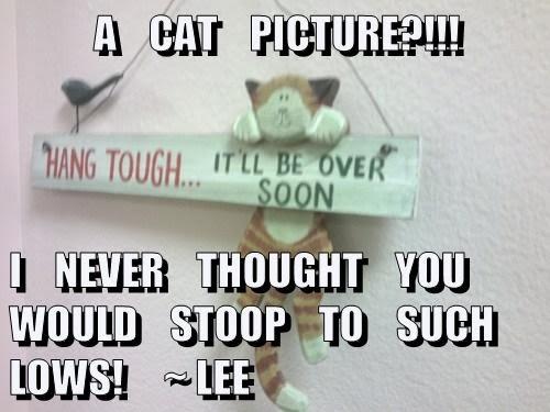A Cat Picture?!!!