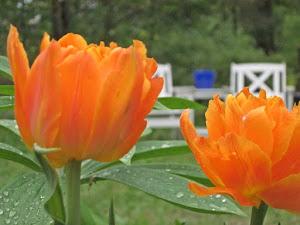Leena Lumin puutarhassa