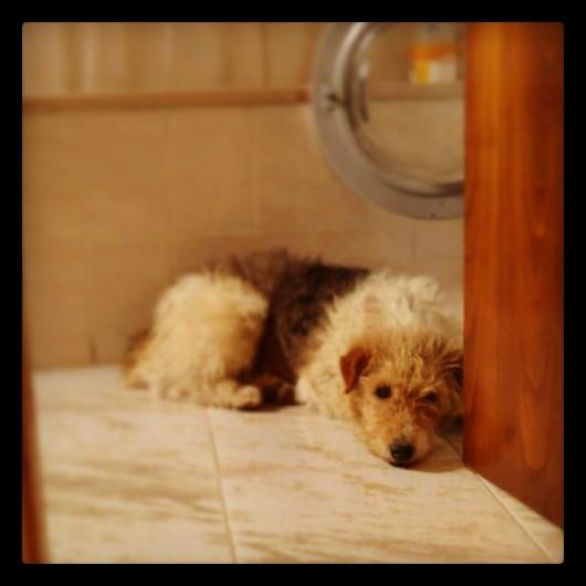 El perro de mi vecino en mi baño