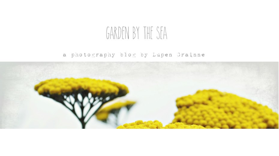 Garden by the sea -  Photography blog by Lupen Grainne