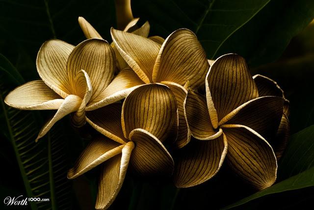15796843 b5ee 1024x2000 - Wooden Materials Art