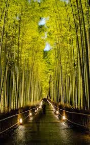 Kyoto Beautiful Bamboo Garden