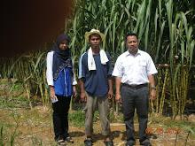 Tuan pegawai Jabatan Pertanian Daerah Batang Padang Melawat Projek Tanaman Tebu Tg. Malim.