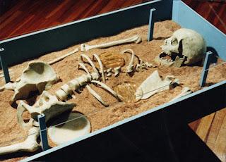 Restos protohumanos - femeninos