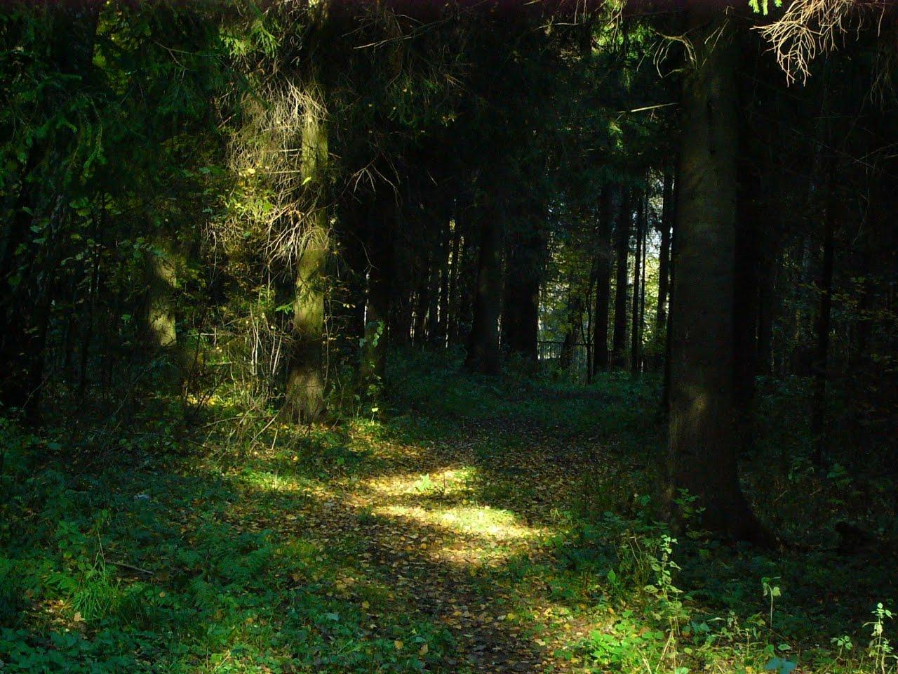 http://4.bp.blogspot.com/-09CtULMQjpM/TeLUNnVtYkI/AAAAAAAAFeE/8tHZQYPWS20/s1600/Autumn_in_Rosinka_forest22.jpg