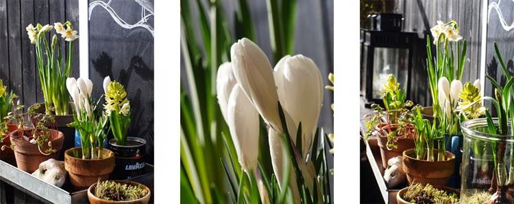 Brug massevis af forårsbebudere til at skabe forår og frodighed i haven