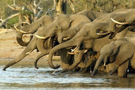 Fotos de grandes herbívoros salvajes Fotonostra - imagenes de animales de africa