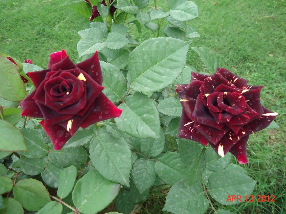 World Beautiful Flowers