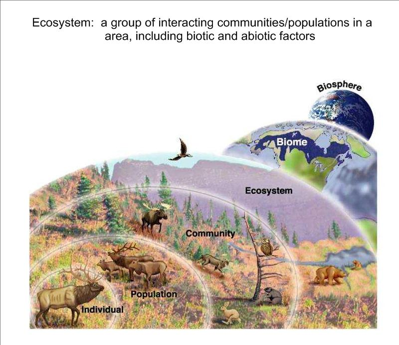 abiotic and biotic factors of the Abiotic factors are the non-living factors that affect living organisms, and so affect  communities these factors do not work in isolation - they combine to produce.