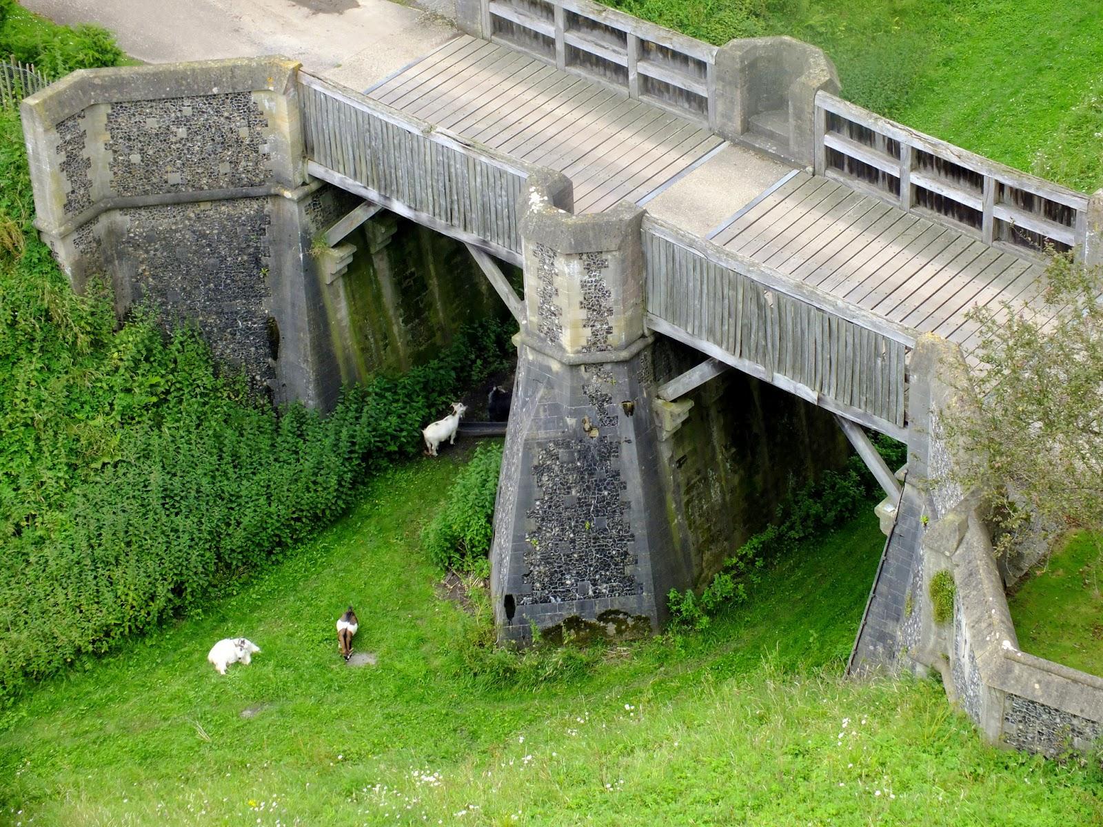 most, kozy, zwierzęta hodowlane