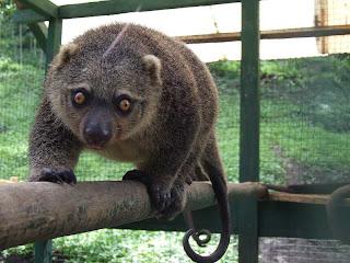 Alam Negeri: Pembagian Jenis Fauna di Indonesia