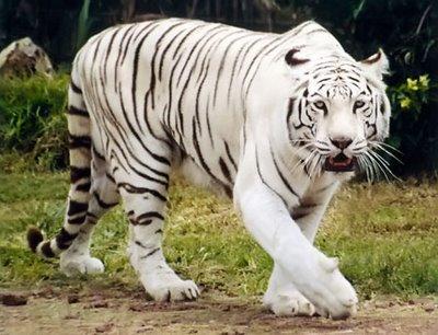Animales en vía de extinción: conózcalos y cuídelos  - imagenes de animales en via de extincion