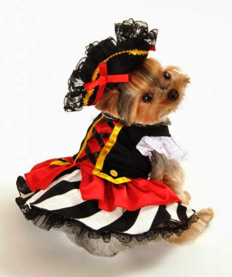 pirate wench dog costume