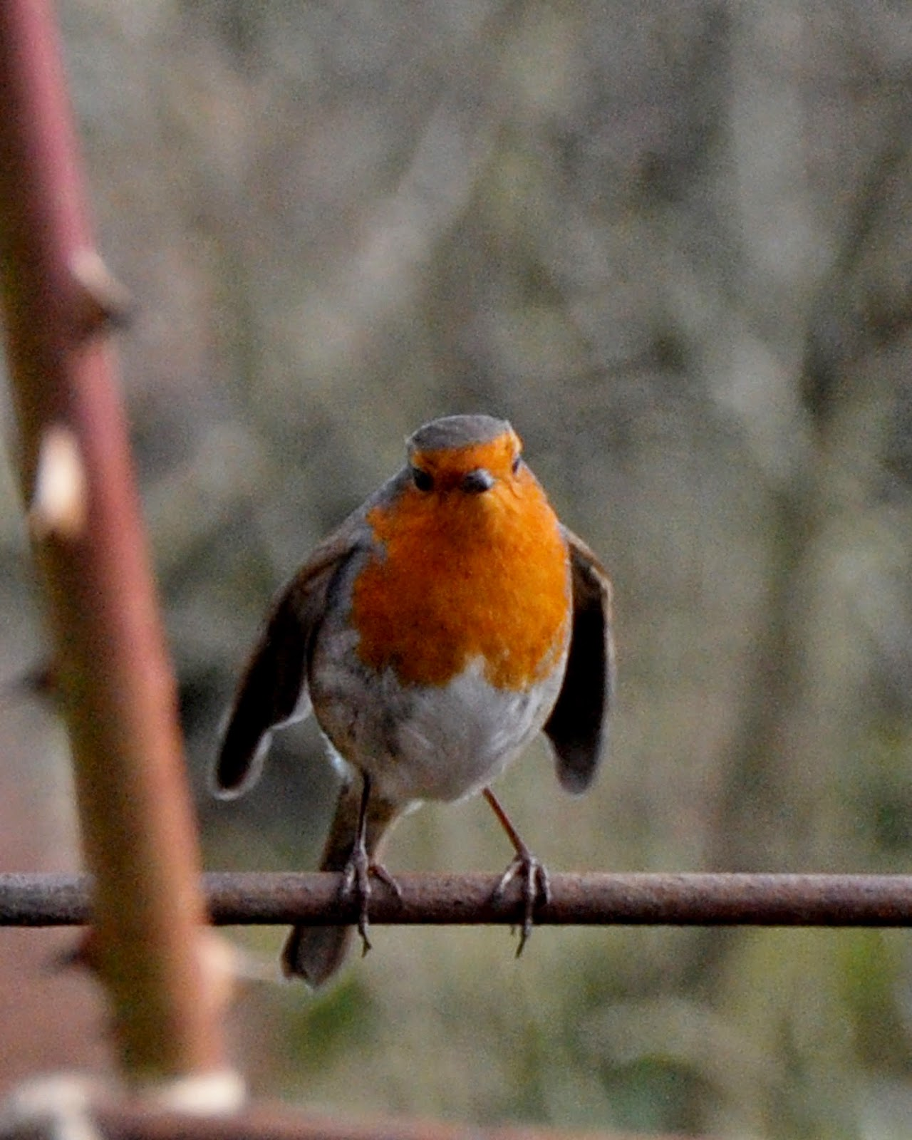Robin at Kellie Castle