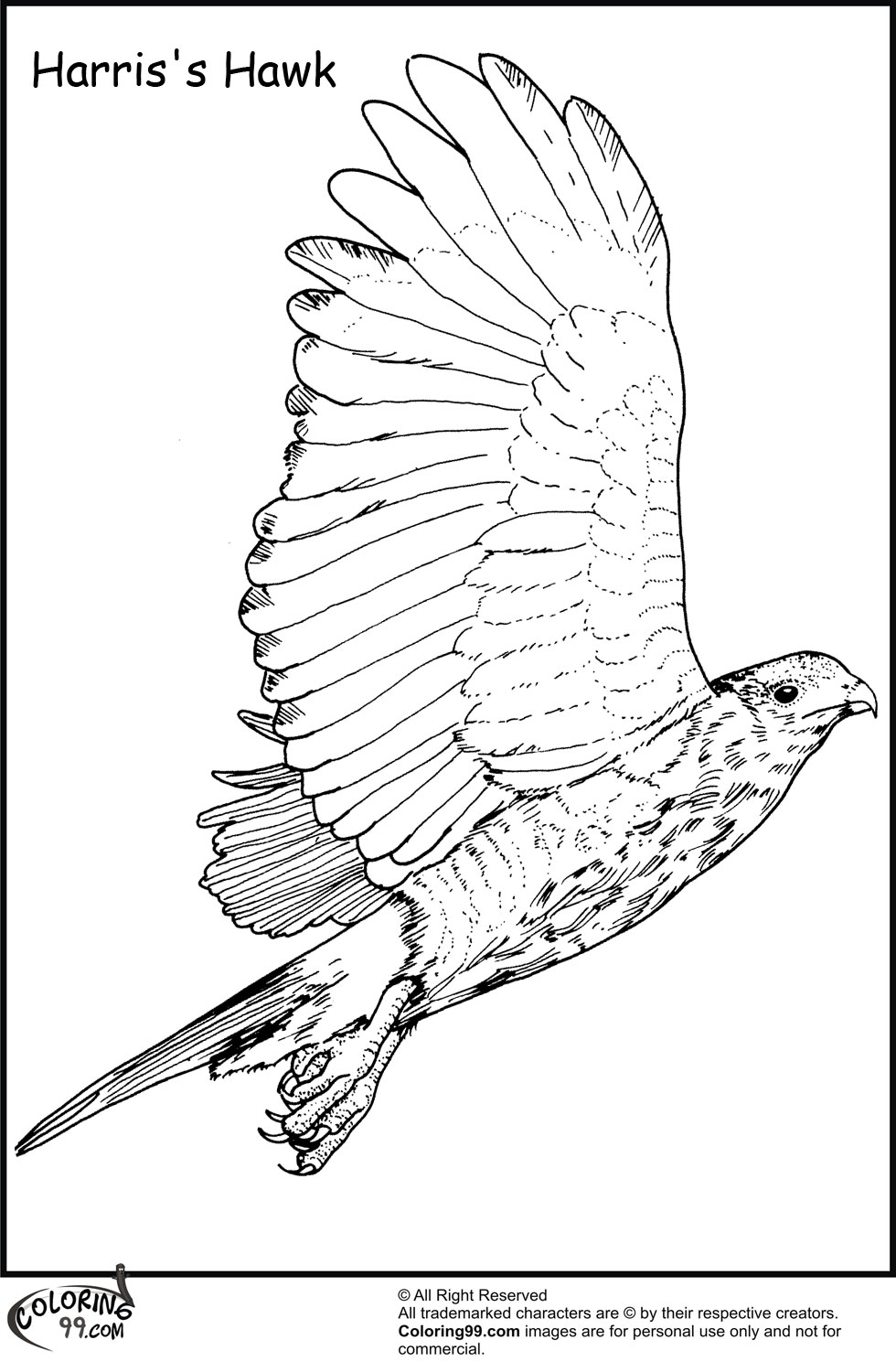 hawk coloring pages - hawk coloring pages team colors