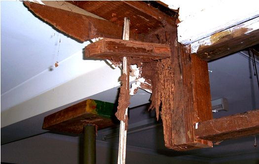 how to get rid of termites around the house