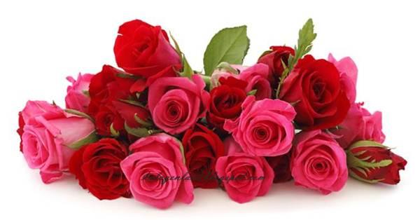 Manfaat Air Mawar untuk Kecantikan Kulit, Wajah, Rambut