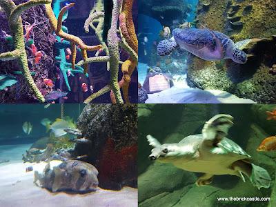 Sealife Manchester turtles ernie