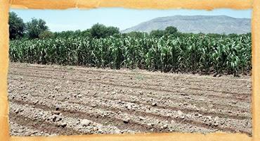 Tipos de suelos en colombia tipos de suelos en colombia for Suelos y tipos de suelos