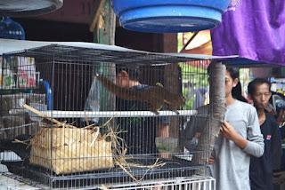 upaya perdagangan hewan langka via on line