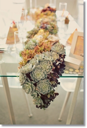 succulenter, dukning succulenter, succulents, table runner succulents, tablet top succulents, table setting succulents, häftig dukning