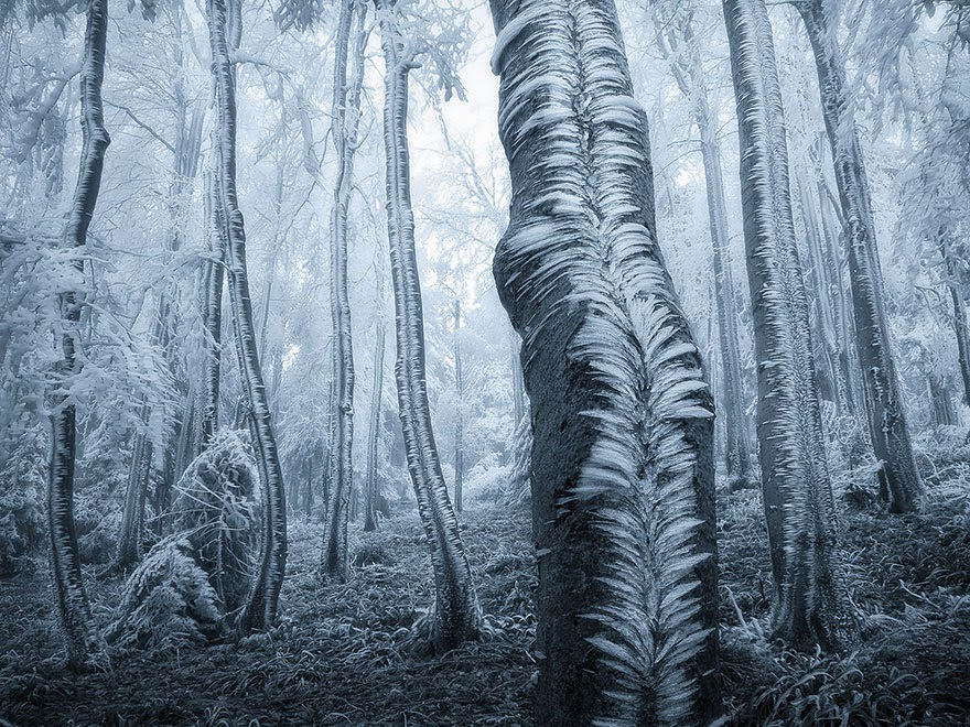 4. Beskydy Mountains, Czech Republic - 22 Mysterious Forests I'd Love To Get Lost In