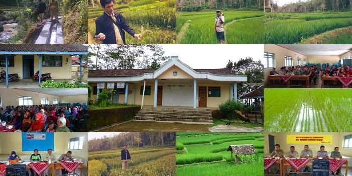 Foto Kegiatan Penyuluhan Pertanian Desa Wonosidi