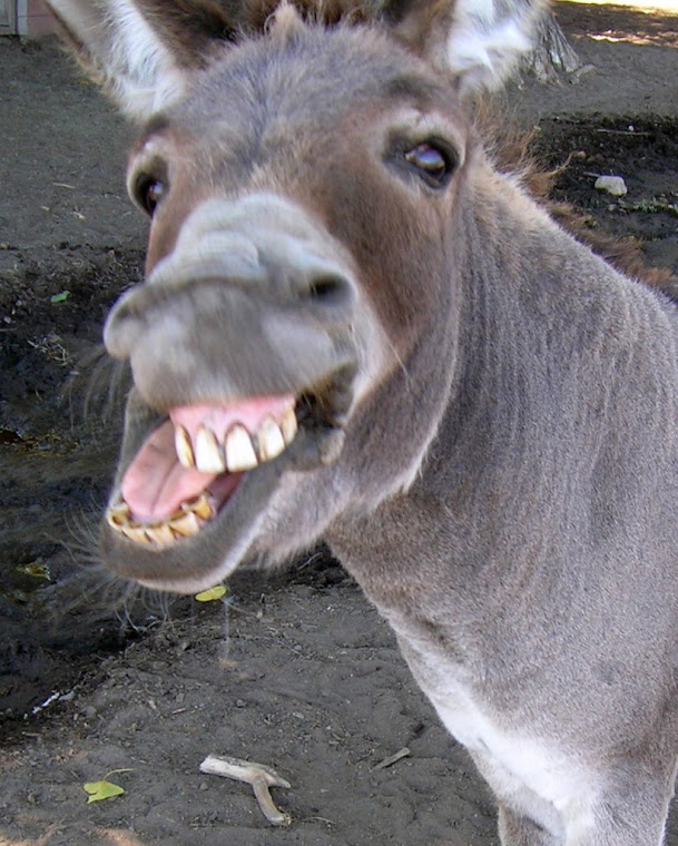 braying donkey