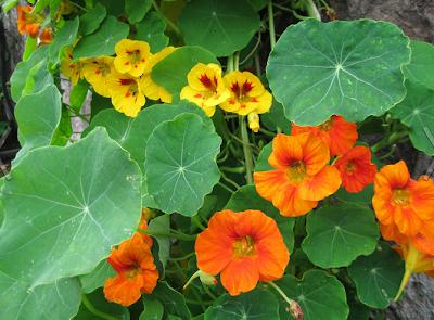 какие-цветы-вырастить-из-семян