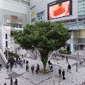 この木なんの木,樹木,新宿駅南口〈著作権フリー無料画像〉Free Stock Photos