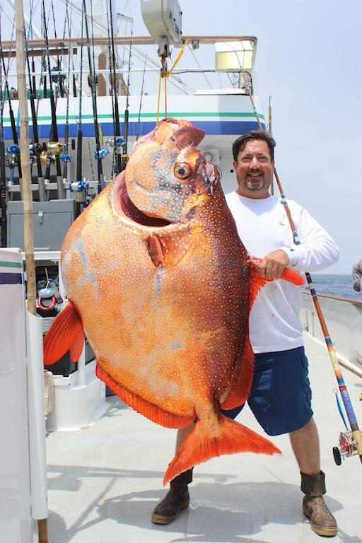 內溫的 Opah 月魚