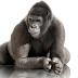 Corning memperkenalkan 3D berbentuk Gorilla Glass