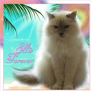 Ellie Forever