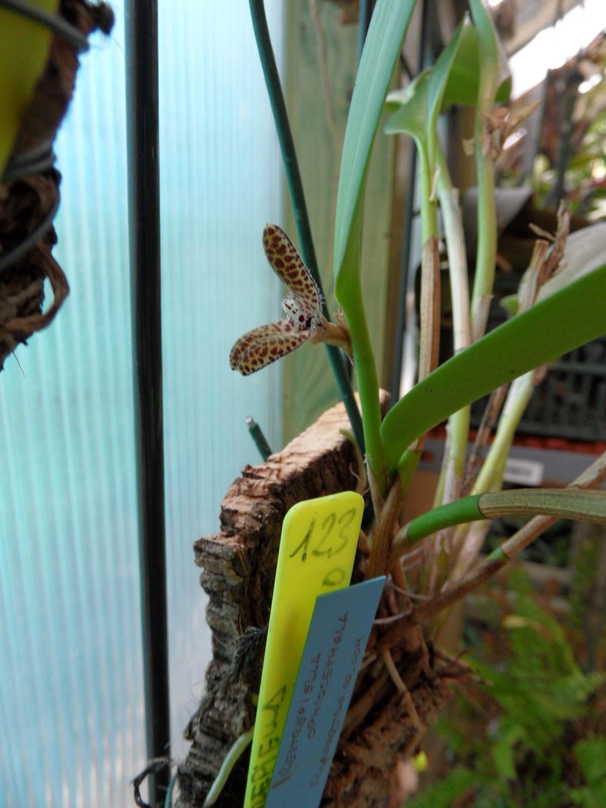 Orquideas que florecen en abril - Como cuidar orquideas en maceta ...