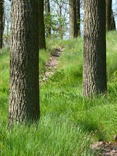 Wanderweg, Wanderung, UNteres Mittelrheintal