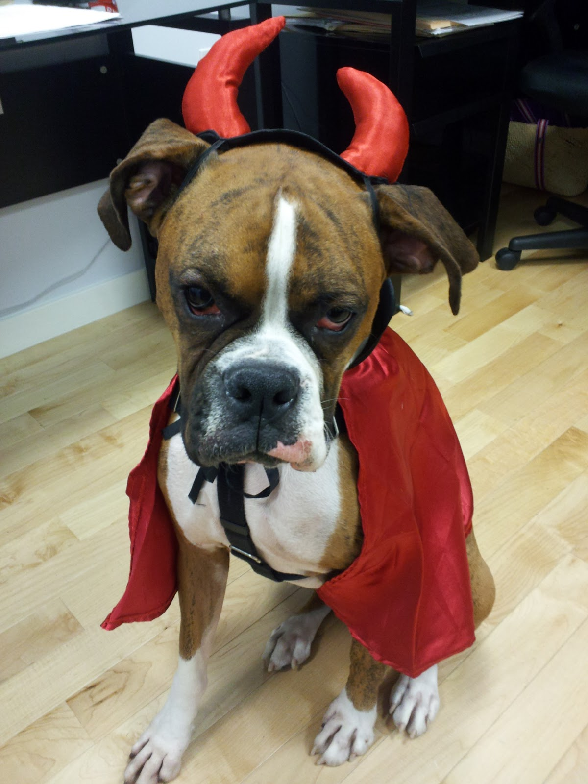 ... right he made that decision all by himself he s going as a devil dog