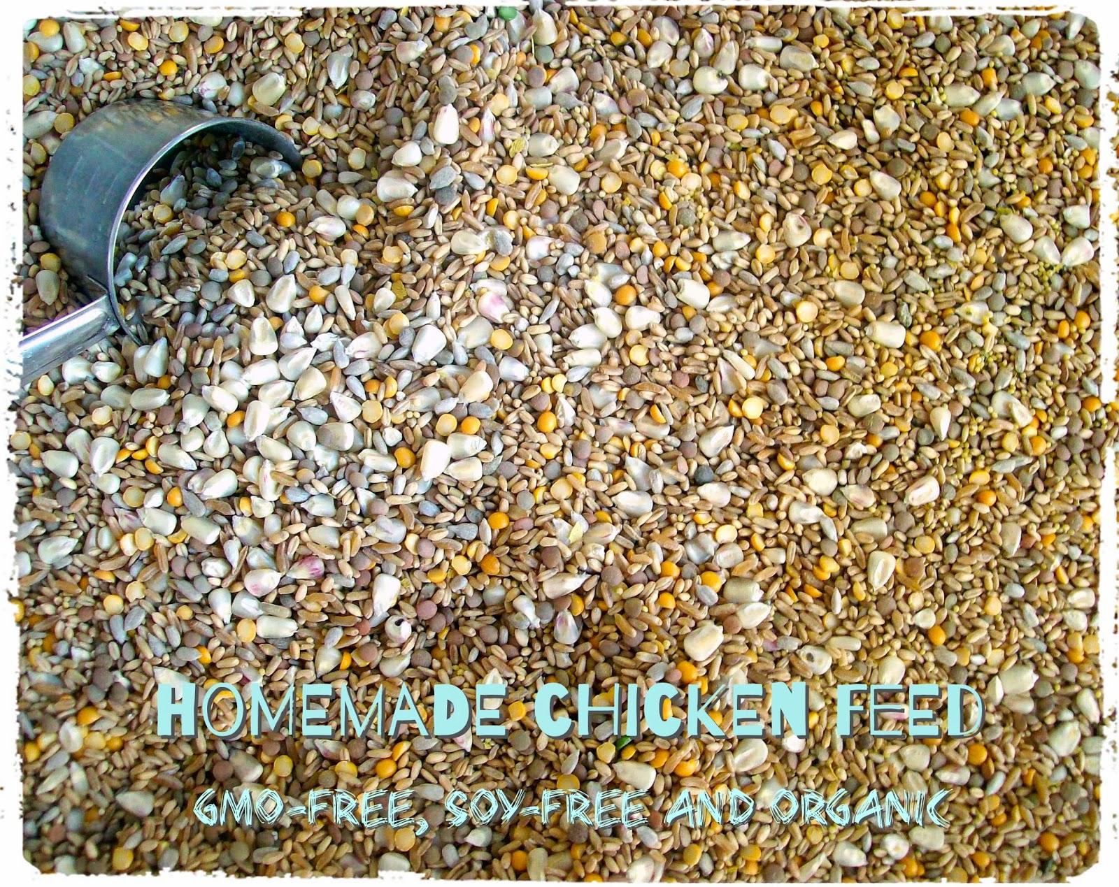Organic, GMO-free Homemade Chicken Feed