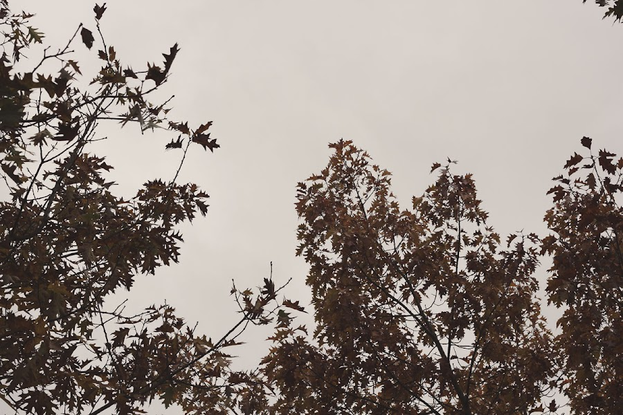 Chelmsford park autumn